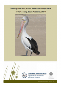 2010-11 pelican breeding report