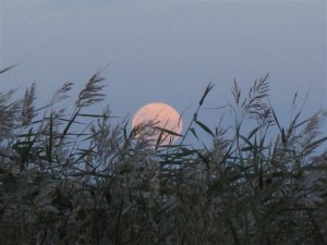 Rising moon over Lake Alexandrina